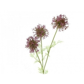 Allium x3 burdeos